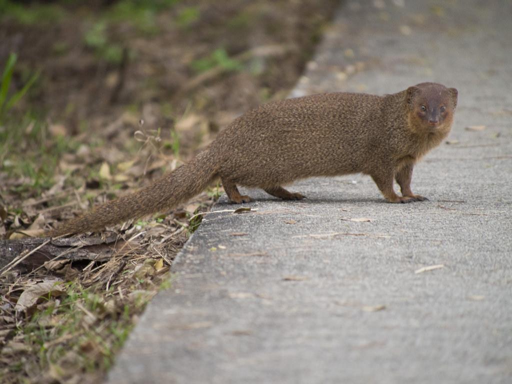 Mongoose2